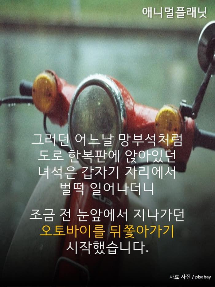 애니멀플래닛